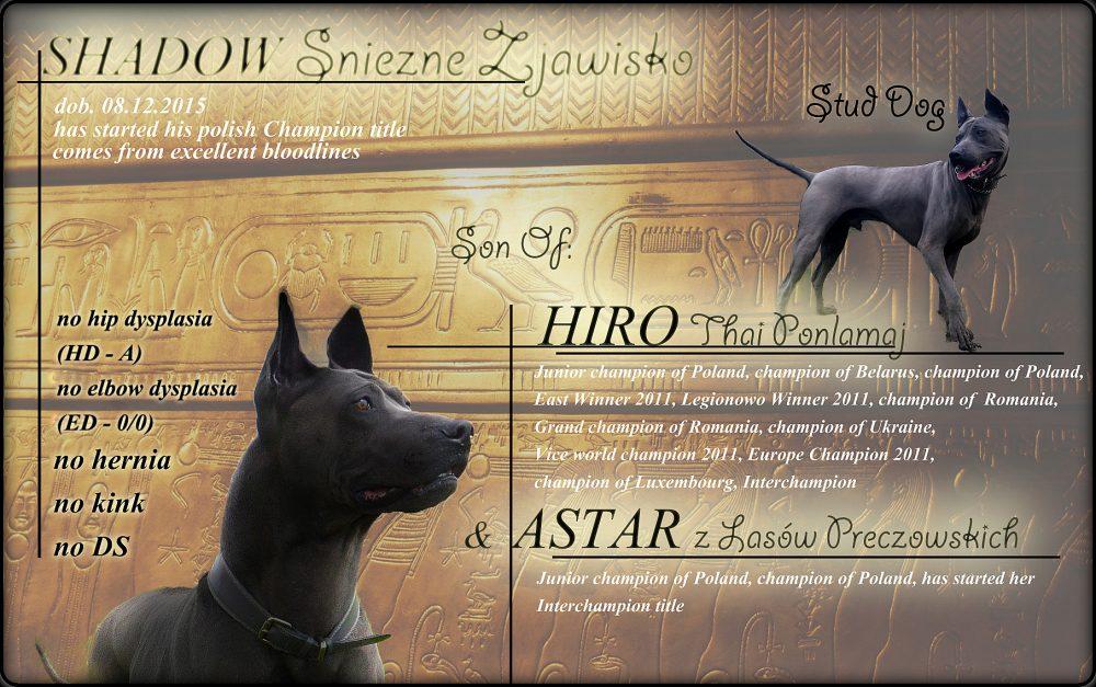 thai ridgeback dog reproduktor, stud dog